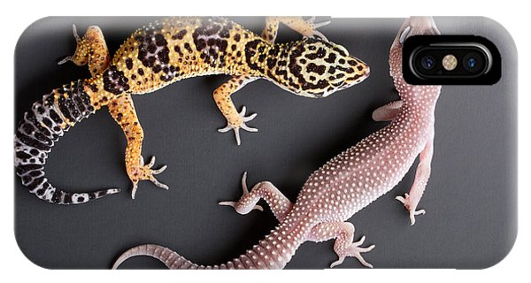 Leopard Gecko E. Macularius Collection IPhone Case