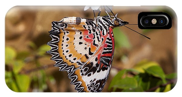 Leopard Lacewing Butterfly Dthu619 IPhone Case