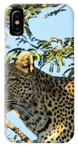 Leopard Photography IPhone Case