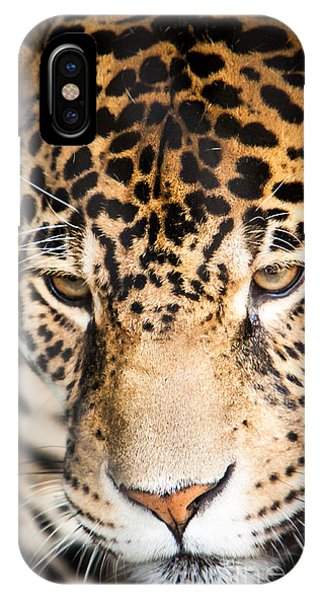 Leopard Resting IPhone Case