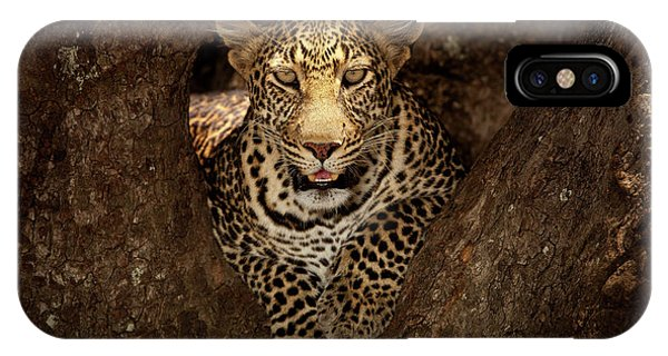 Leopard Resting On A Tree At Masai Mara IPhone Case