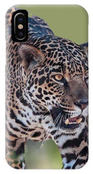 Jaguar Walking Portrait IPhone Case