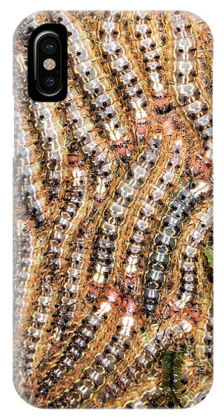 Caterpillar iPhone Case - Lepidopteran Larvae On Tree Trunk by Dr Morley Read