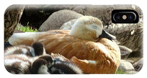 Let Sleeping Ducks Lie IPhone Case