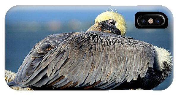Let Sleeping Pelicans Lie IPhone Case
