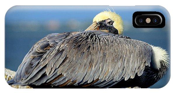 Let Sleeping Pelicans Lie IPhone Case