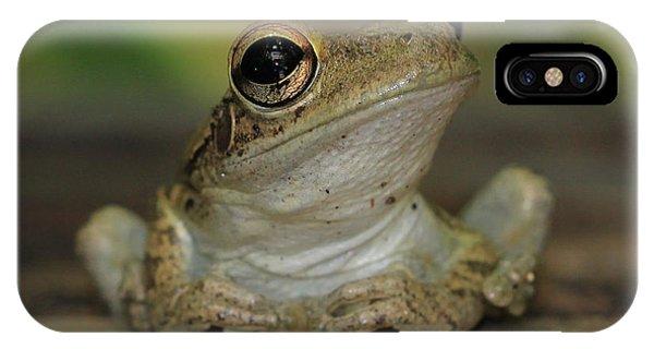 Let's Talk - Cuban Treefrog IPhone Case