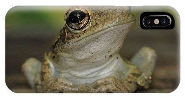 Let's Talk - Cuban Treefrog IPhone Case