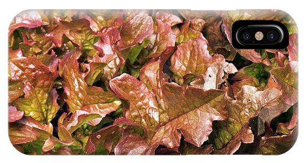 Cultivar iPhone Case - Lettuce 'salad Mix' by Adrian Thomas