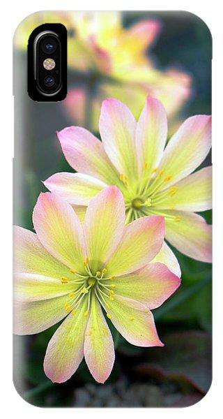 Cultivar iPhone Case - Lewisia Tweedyi 'rosea' Flowers by Adrian Thomas