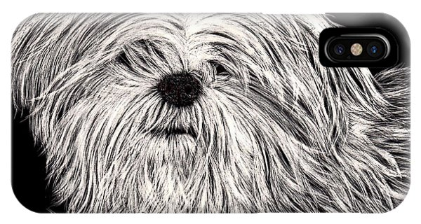 Lhasa Apso IPhone Case