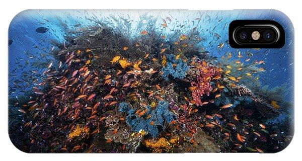 Dive iPhone Case - Life Explosion by Barathieu Gabriel