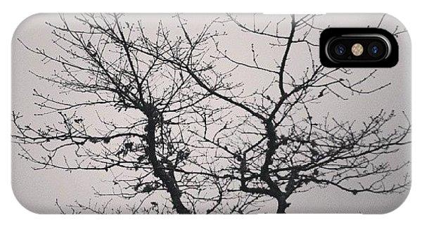 Impressionism iPhone Case - Lightness Tree by Jose Barbosa