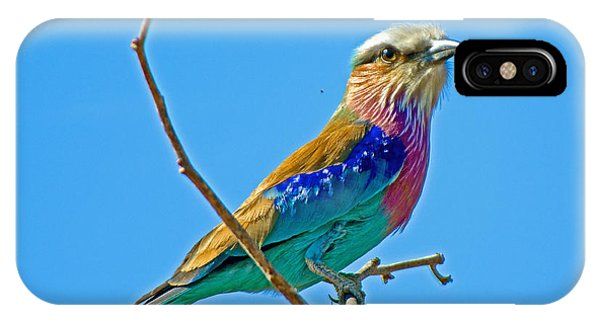 Lilac-breasted Roller In Kruger National Park-south Africa IPhone Case