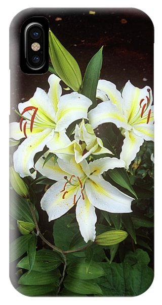 Golden Gardens iPhone Case - Lilium 'golden Ray' by A C Seinet/science Photo Library