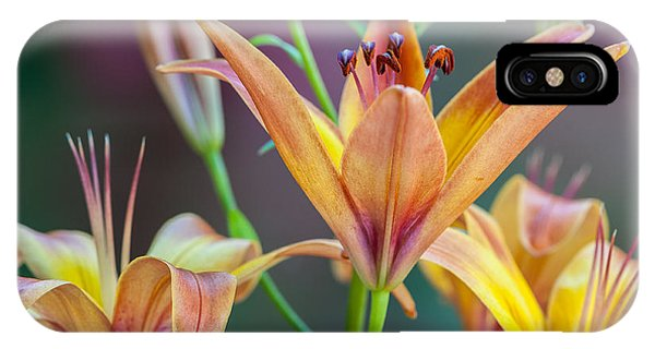 Lily From The Garden IPhone Case