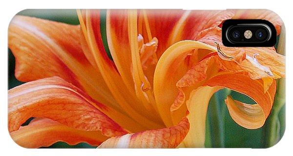 Lily In Orange2 IPhone Case