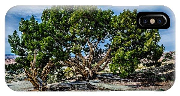 Limber Pine IPhone Case