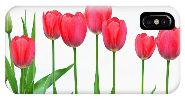 Line Of Tulips IPhone Case