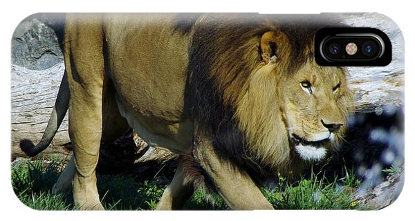 Lion 1 IPhone Case