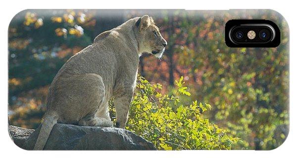 Lion In Autumn IPhone Case