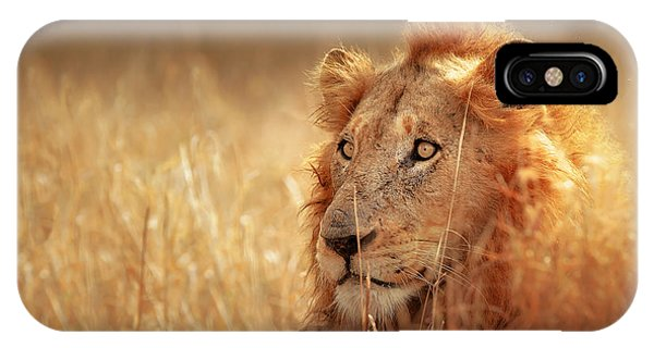 Grass iPhone Case - Lion In Grass by Johan Swanepoel