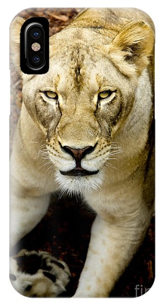 IPhone Case featuring the photograph Lion-wildlife by David Millenheft