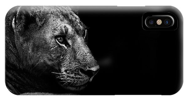 Lions iPhone Case - Lion by Wildphotoart