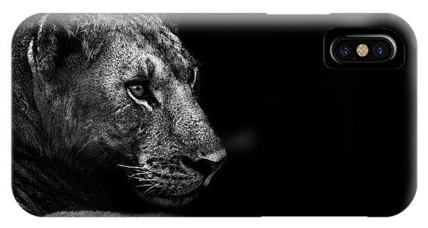 Lion iPhone Case - Lion by Wildphotoart