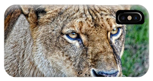 Lioness Deep In Thought Hdr IPhone Case