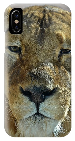 Lioness Portrait IPhone Case