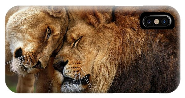 Lion iPhone Case - Lions In Love by Emmanuel Panagiotakis