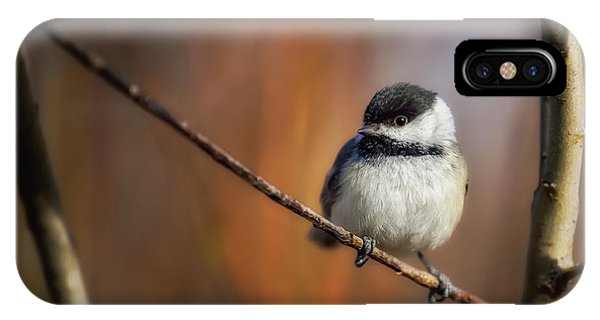 Chickadee iPhone Case - Litlle thing by Christian Duguay