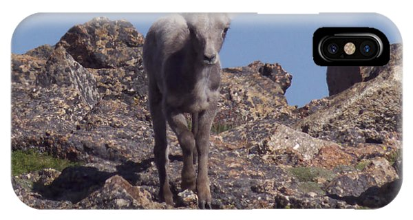Little Big Horn Sheep Looking IPhone Case