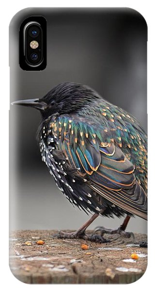 Little Bird In Pacifica IPhone Case