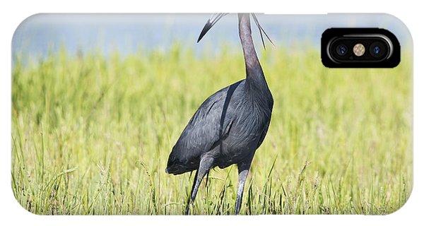 Little Blue Heron In The Marsh IPhone Case