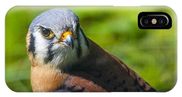 Little Falcon IPhone Case