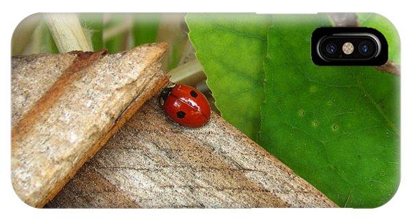Little Lazy Ladybug IPhone Case