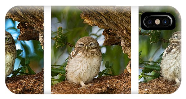 Little Owl Triptych IPhone Case