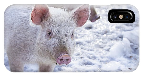 New Hampshire iPhone Case - Little Piggies by Edward Fielding