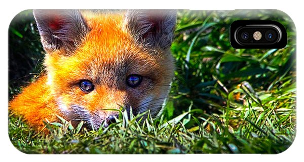 IPhone Case featuring the photograph Little Red Fox by Bob Orsillo