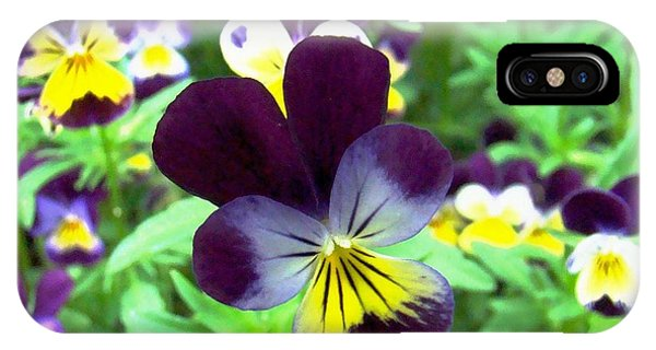 Little Violas IPhone Case
