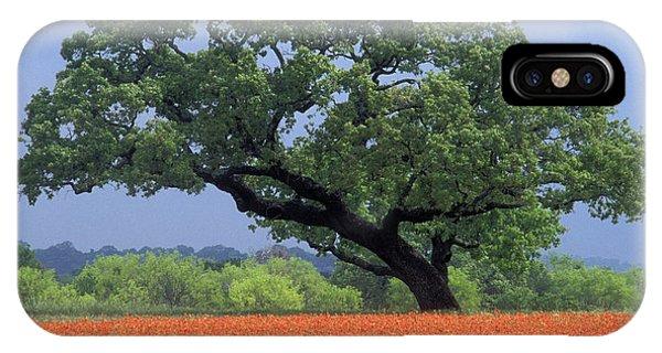 Scarlet Paintbrush iPhone Case - Live Oak And Paintbrush - Fs000920 by Daniel Dempster