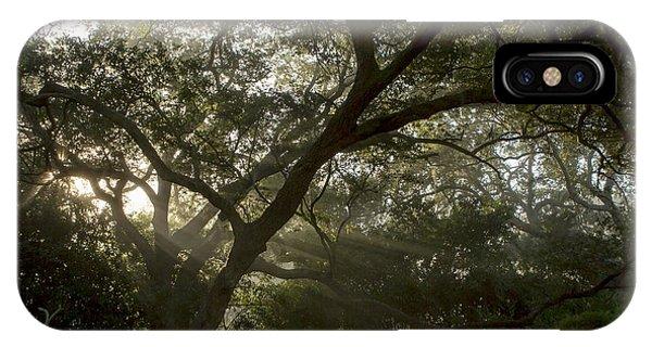 Live Oak Light Streaming Through Fog Phone Case by Kelly Morvant