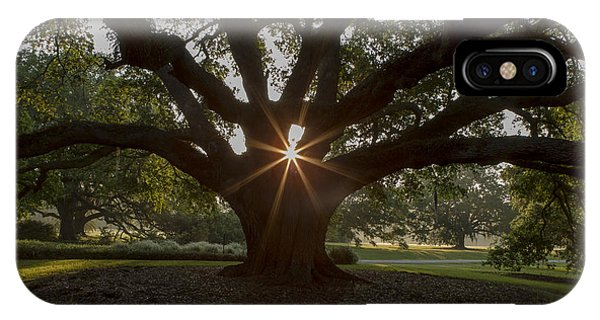 Live Oak With Early Morning Light Phone Case by Kelly Morvant