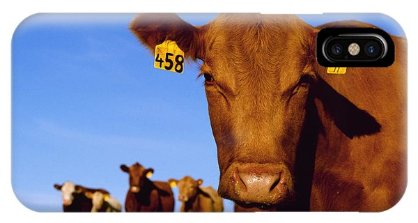 Livestock - Closeup Of A Red Angus Cow IPhone Case