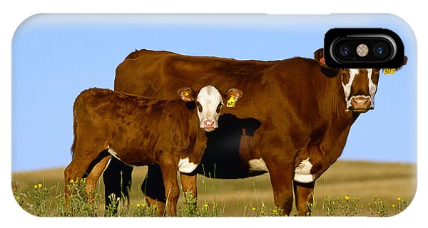Livestock - Crossbred Cow And Calf IPhone Case