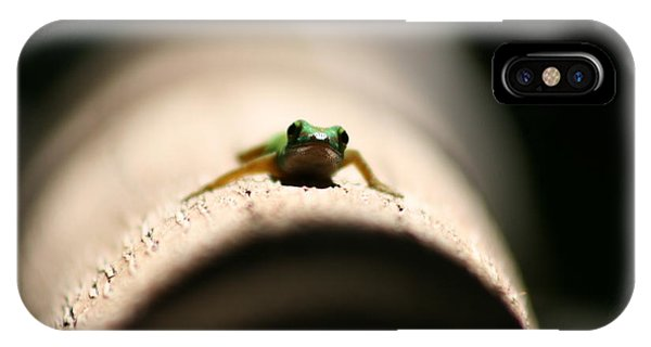 IPhone Case featuring the photograph Lizard On A Log by Debbie Cundy
