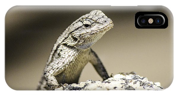 Lizard On The Rocks Phone Case by Luna Curran
