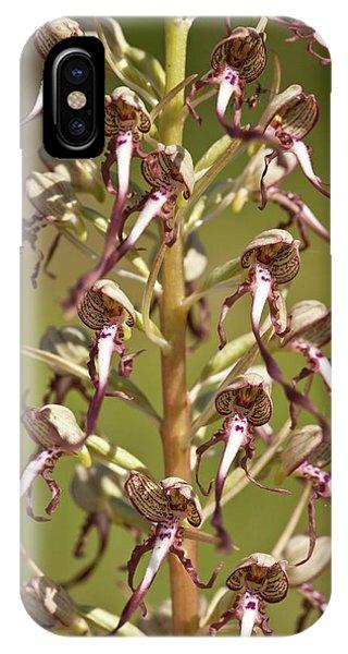Monocotyledon iPhone Case - Lizard Orchid (himantoglossum Hircinum) by Bob Gibbons